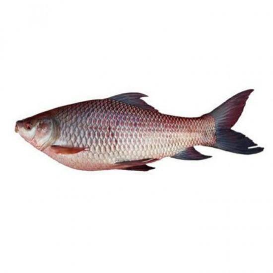 Al Madina Fisk Rohu 20kg 2kg+